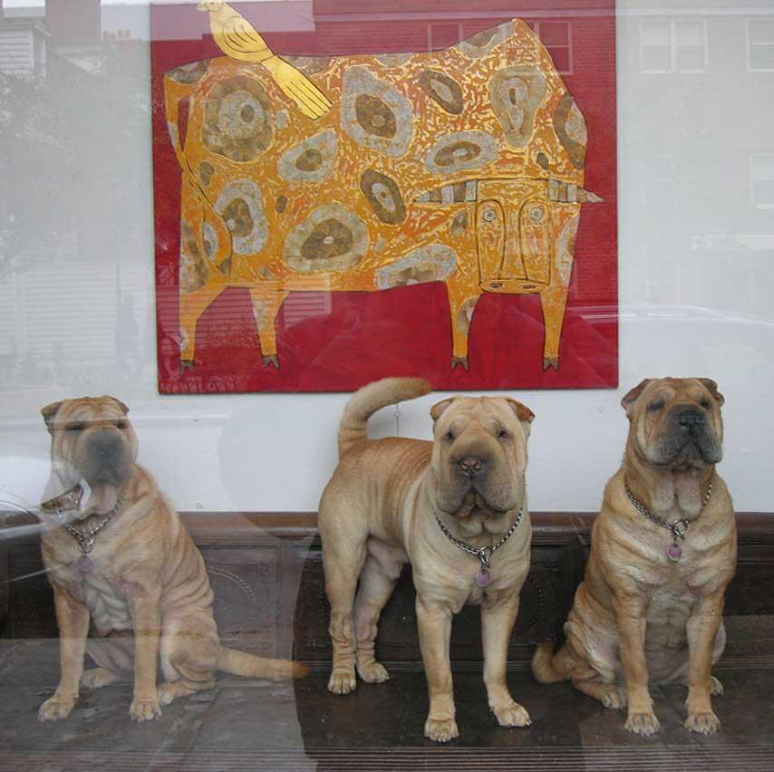 ギャラリーと犬3匹.jpg