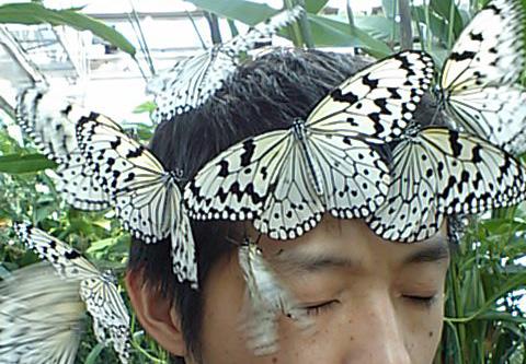 顔と蝶.jpg